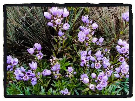 Flora de los Andes Ecuatorianos