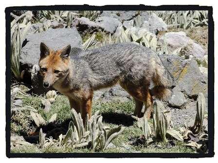 Andes fauna, Ecuador