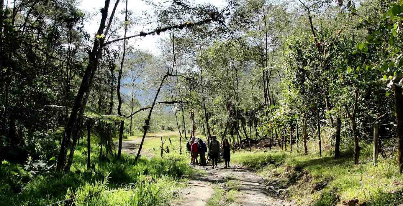Trekking Lloa - Mindo, último tramo