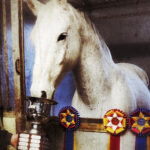 photo of Terminal Frost horse