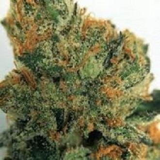 Buy Headcheese OG marijuana