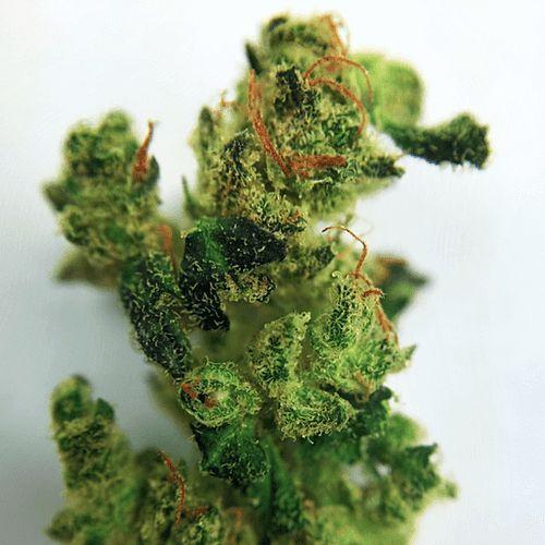 Buy Rocklock Cannabis Strain