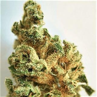 Order Lemon Tree Marijuana