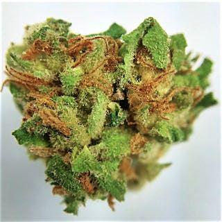 Buy Blueberry Pie Marijuana