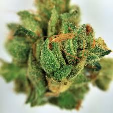 Buy Chemdawg-91 Cannabis Online