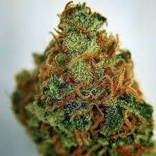 Buy Goo Marijuana Strain
