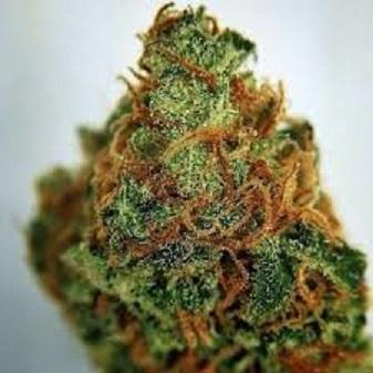 Buy Gorilla Glue #4 Cannabis