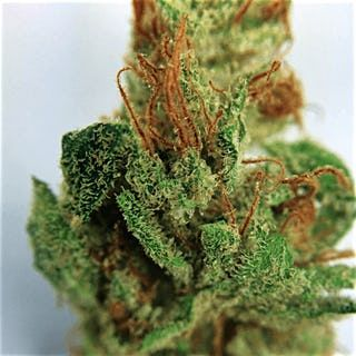 Order Chernobyl marijuana Strain