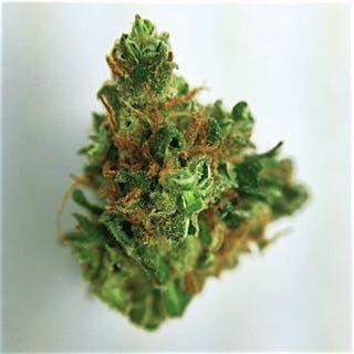 Buy Pre-98 Bubba Weed
