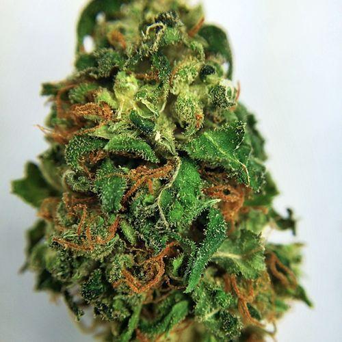 Order Papaya Marijuana Online