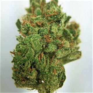 Buy Phantom Cookies Marijuana