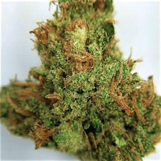 Buy Kandy Kush Marijuana