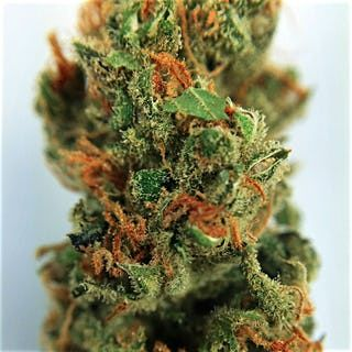 Order The White Marijuana