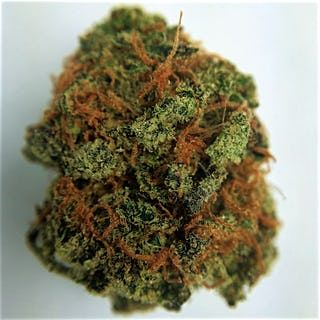 Buy 707 Headband kush