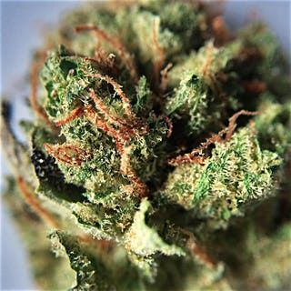 Buy Green Crush Marijuana