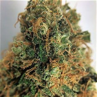 Buy Grape Kush Marijuana