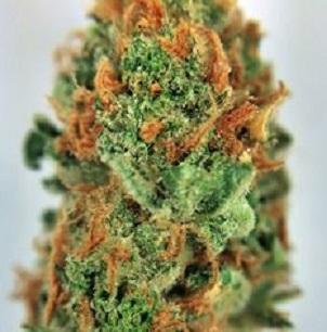 Buy Alpha OG Marijuana