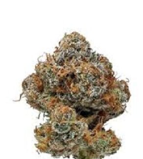 Buy Buddha Haze Marijuana
