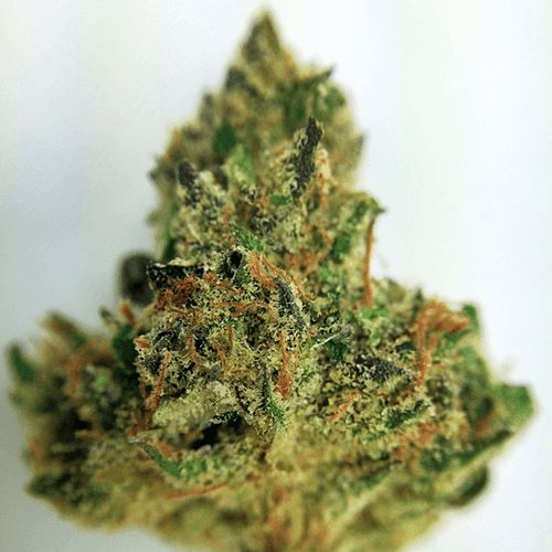 Buy Cali Dream kush
