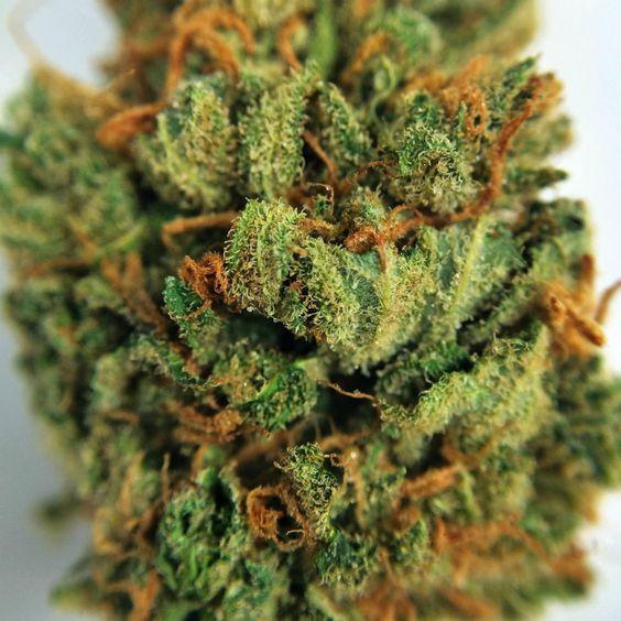 Buy Blaze Cannabis Online