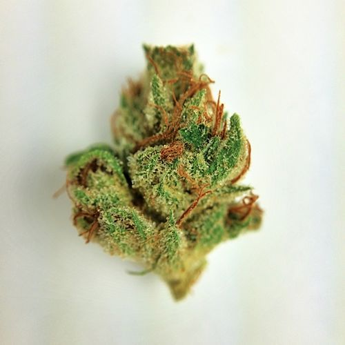 Buy Brain OG Kush