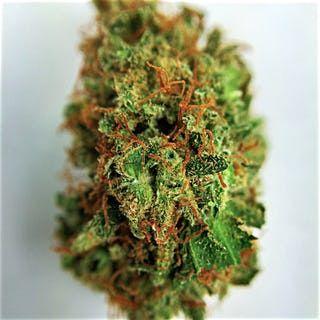 Buy Blue Fire Weed