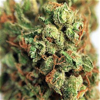 Order G-13 Haze Marijuana