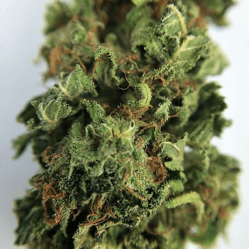 Order Arjan's Strawberry Haze