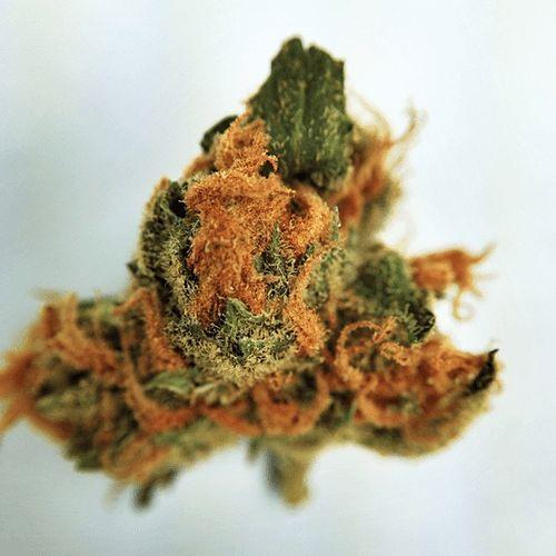 Buy Blue Crack Cannabis