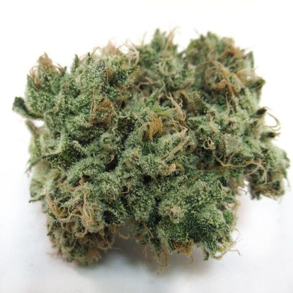Buy Majestic 12 Marijuana