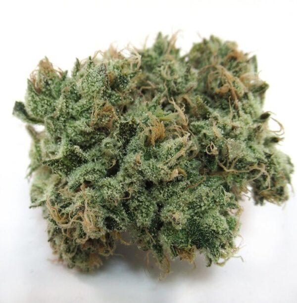 Buy Majestic 12 Marijuana