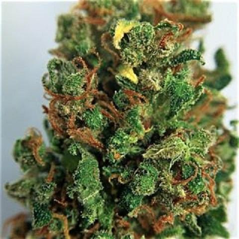 Buy Matanuska Tundra Marijuana
