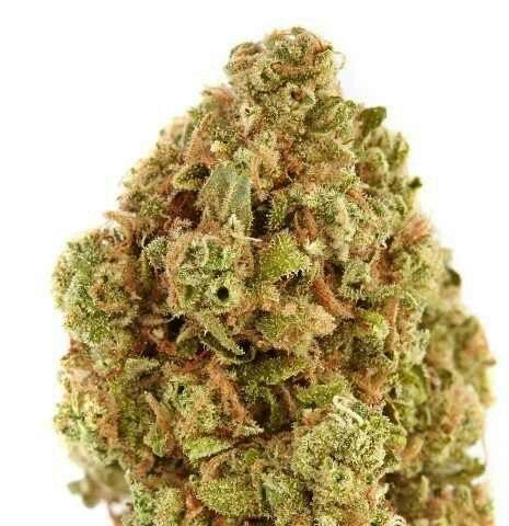 Buy sweet pebbles marijuana