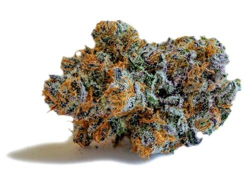 Buy Ringo's Gift Marijuana