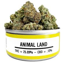 Buy Animal Land marijuana