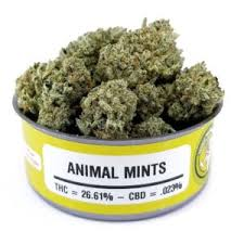Animal Mints