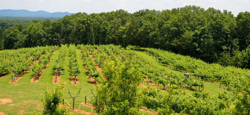 North Georgia Winery