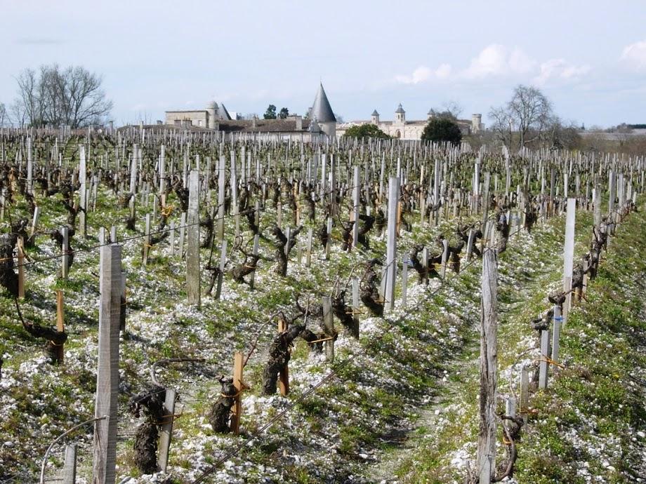 Bordeaux Travel Rothschild Vineyard