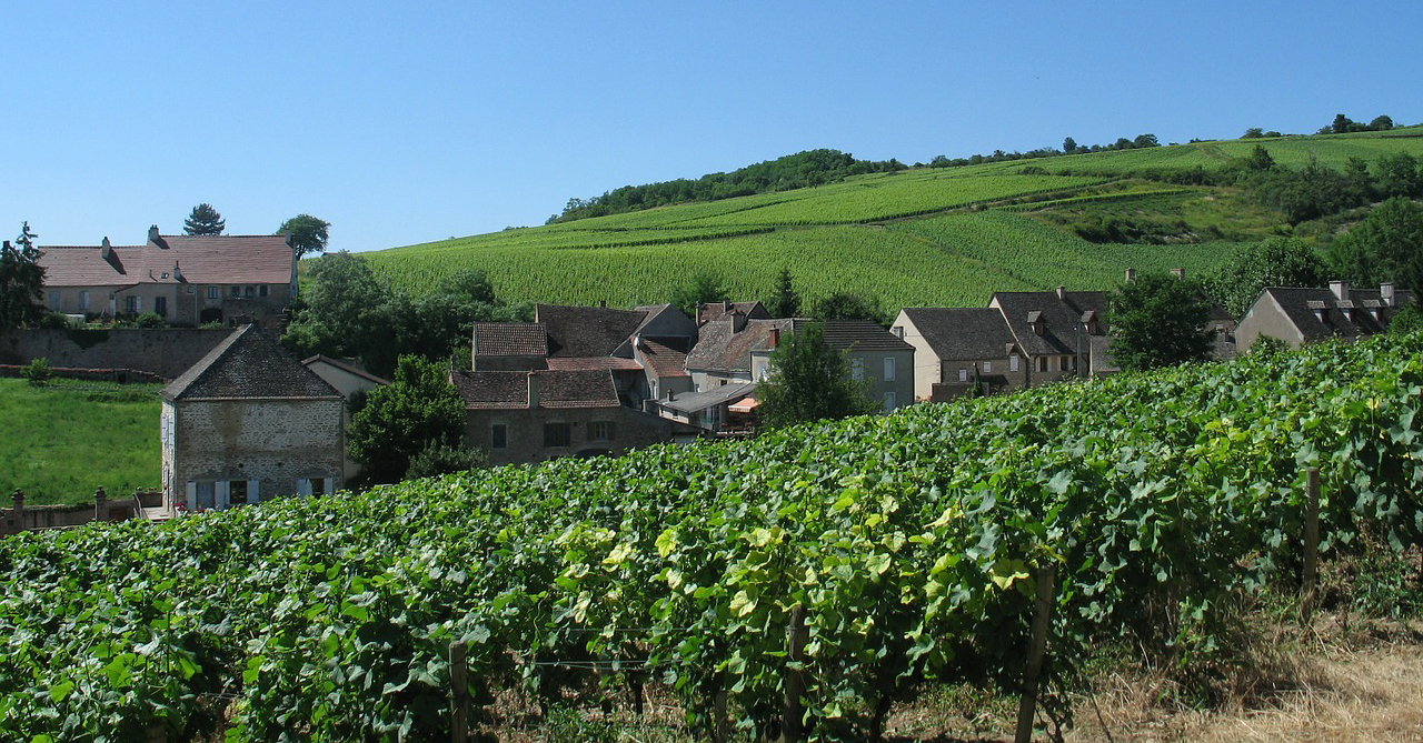 Wine Tasting in Burgundy France