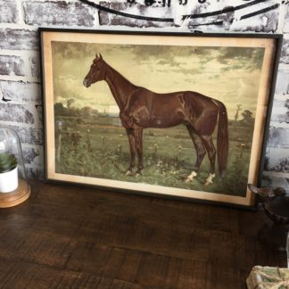 Prized Horse In Pasture Framed Print 2
