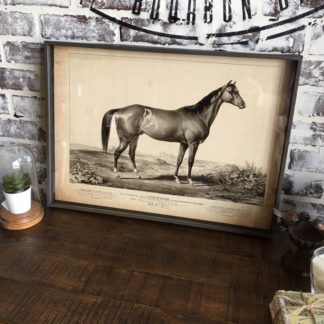 Famous Race Horse Framed Print- Lexington