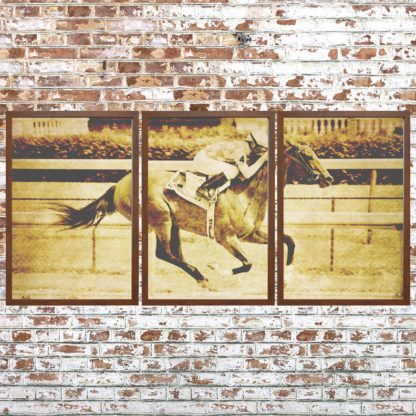 Distressed Thoroughbred Triptych (Framed)