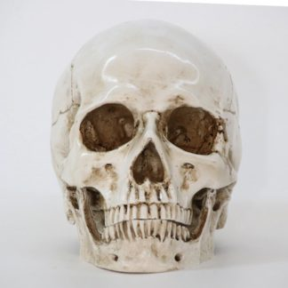 Skull Resin Sculpture