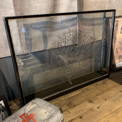 Coral Tree in Glass Case