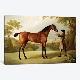 Tristram Shandy- Framed Canvas Giclee