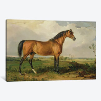 Eagle, A Celebrated Stallion- Framed Canvas Giclee