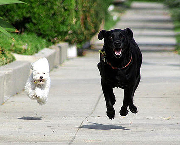 Running with the big dogs