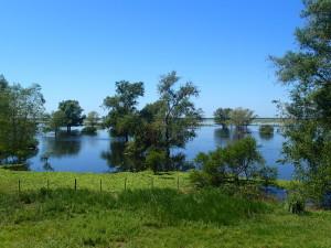 Delta river Uruguay