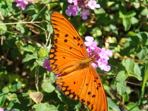 Butterflies are amazing in South America