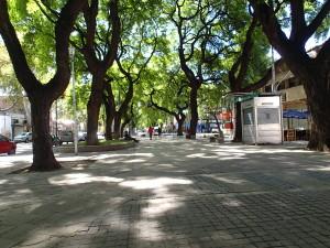So many shade trees in Mendoza